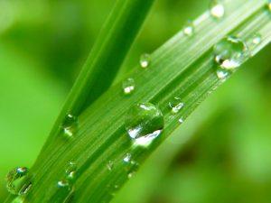 waterdrop  300x225 CPD